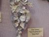 violet-seahorse
