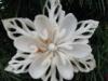 lilycut-snowflake-2