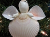 scallop-angel