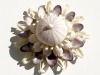 white-shell-blossom-with-urchin-for-print